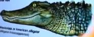 SML Alligator