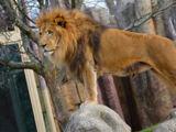 The Powerpuff African Animals