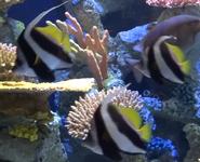 Cleveland Metroparks Zoo Penart Coarlfish