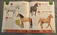 Horse Dictionary (14)