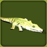 Nile Crocodile (Blue Fang)