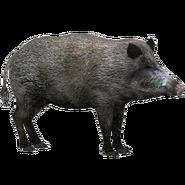 Zoo Tycoon Boar