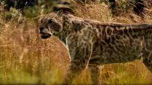 BBC.Walking.with.Beasts.Pt.4.Next.of.Kin.DivX5-AC3.www.mvgroup.org.uk.avi snapshot 02.44 -2016.10.08 15.37.11-.jpg