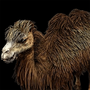Bactrian camel icon