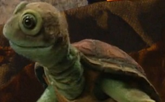 Chauncey the Turtle.png