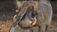 DAK Warthog