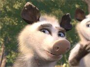 Heather the Possum