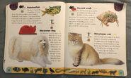 Pet Dictionary (10)