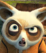 Shifu in the Wix Commercial