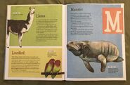 The Dictionary of Ordinary Extraordinary Animals (30)