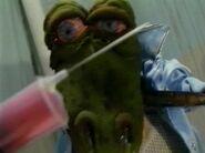 Wynyard the Frog