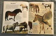 DK Encyclopedia Of Animals (92)