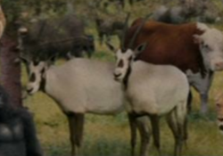 Evan Almighty Oryxes.png