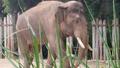Forth Worth Zoo Elephant