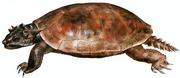 Meiolania platyceps.png