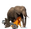 African Bush Elephant, Brown-Throated Sloth, African Lion and Eastern Grey Squirrel