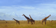 African Cats Giraffes