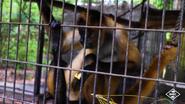 Baton Rouge Zoo Spider Monkey