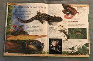 DK First Animal Encyclopedia (49)