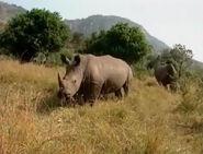 HugoSafari - Rhinoceros05