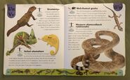 Reptiles and Amphibians Dictionary (25)