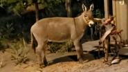 Rolling Hills Zoo Donkey