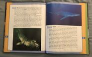 Scholastic Encyclopedia Of Animals (47)