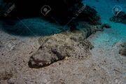 83822262-crocodile-fish-in-the-red-sea-in-egypt.jpg