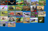 Animal Alphabet 4