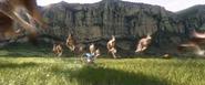 Bilby Kangaroos