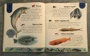 Ocean Life Dictionary (24)