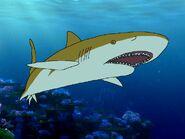 Rileys Adventures Blacktip Reef Shark