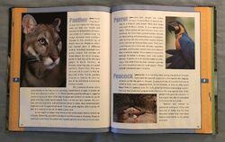 Scholastic Encyclopedia Of Animals (37).jpeg
