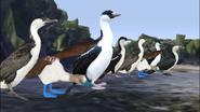 True-loves-kiss-cormorants-and-boobies