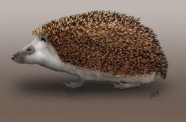 Amphechinus
