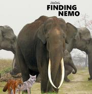 Finding Nemo NR1 Poster