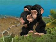 Little Einsteins Chimpanzees