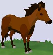 Misaki Horse WOZ