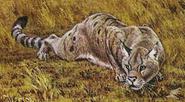 Pseudaelurus cropped