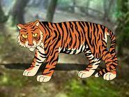 Rileys Adventures Sumatran Tiger