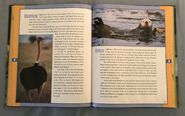 Scholastic Encyclopedia Of Animals (35)