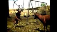 UTAUC Elks