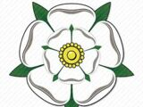 White Rose (4984)