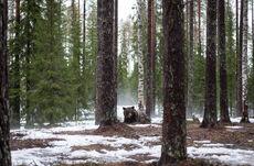Valdor Forest.jpg