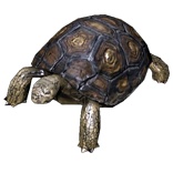 Tortoise Pet inventory icon.png