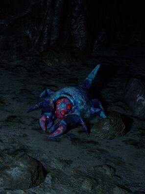 Cave Crustacean