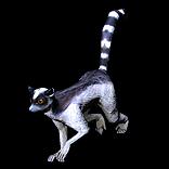 Lemur Pet inventory icon.png