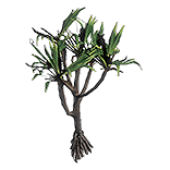 Sarn Palm inventory icon.png