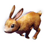 Rabbit Pet inventory icon.png