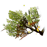 Verdant Wings inventory icon.png